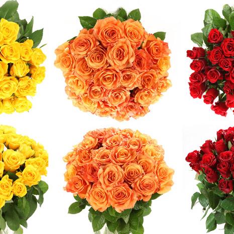 Fotografie kwiatów - bukiety róż