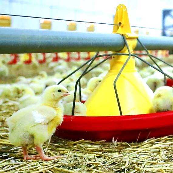 Pasze dla rolnictwa - film
